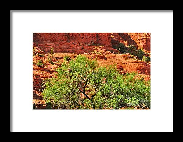 Sedona Framed Print featuring the photograph Tree Set Against Red Cliffs by George Sylvia
