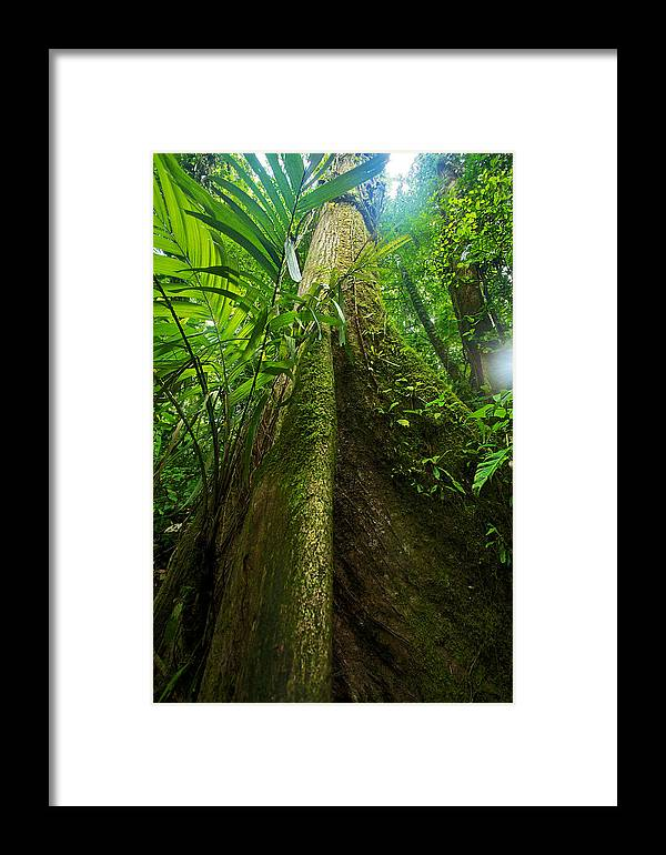 Hike Framed Print featuring the photograph Tree by Simone Pastore