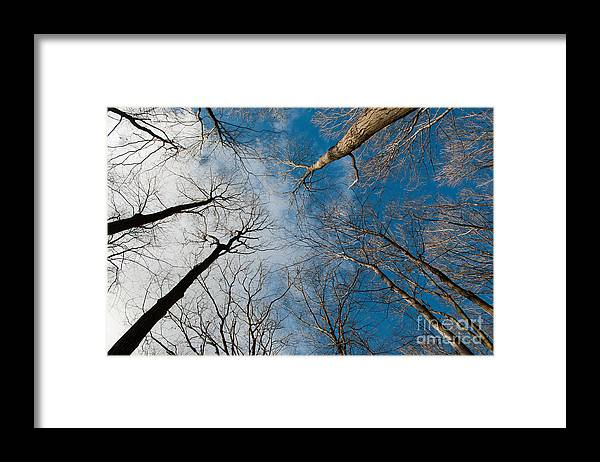 Long Sault Framed Print featuring the photograph Tree Tops on the Wild Turkey Trail by Gary Chapple