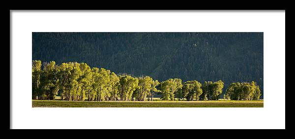 Nature Framed Print featuring the photograph Treeline by Larry Fry