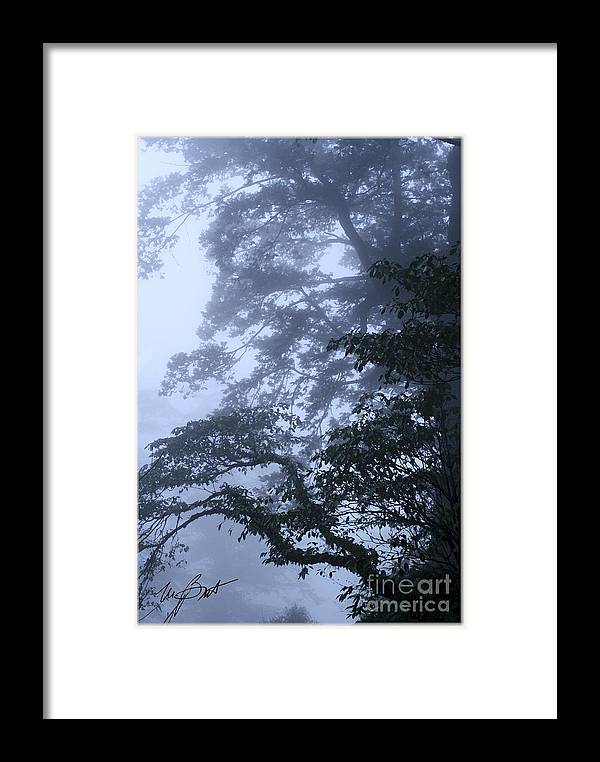 Tree Framed Print featuring the digital art Trees In Fog 2 by Maxine Bochnia