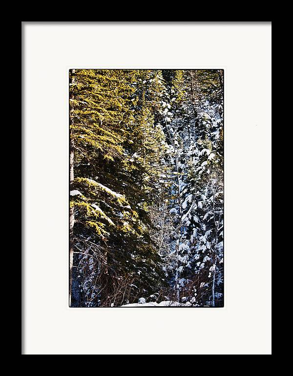 Nature Framed Print featuring the photograph Trees In Taos Village by Lisa Spencer