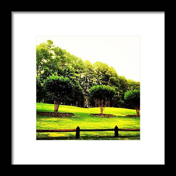 Treescape Framed Print featuring the photograph Trees by Katie Williams