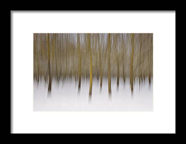 Trees Framed Print featuring the photograph Trees by Michele Pietrangelo