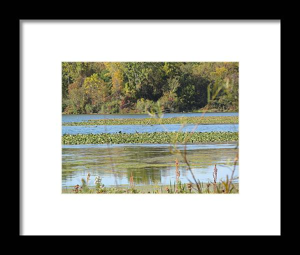 Swamp Framed Print featuring the photograph Tri-ply Swamp by Tina M Wenger