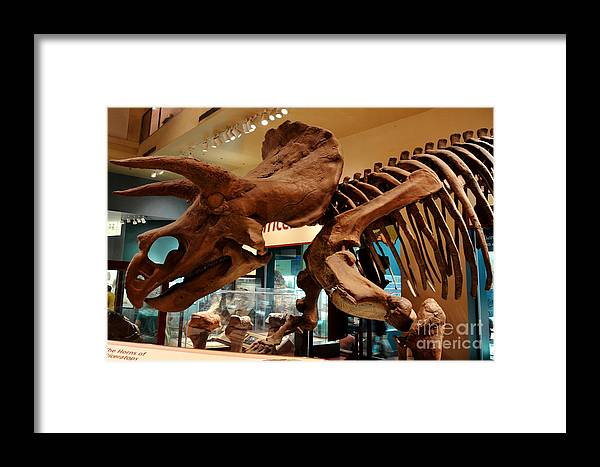 Dinosaur Framed Print featuring the digital art Triceratops At The Smithsonian by Pravine Chester