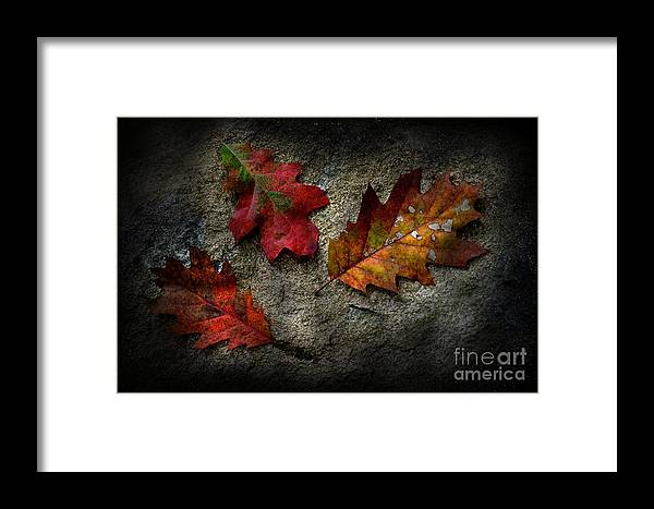 Leaf Framed Print featuring the photograph Trifecta by The Stone Age