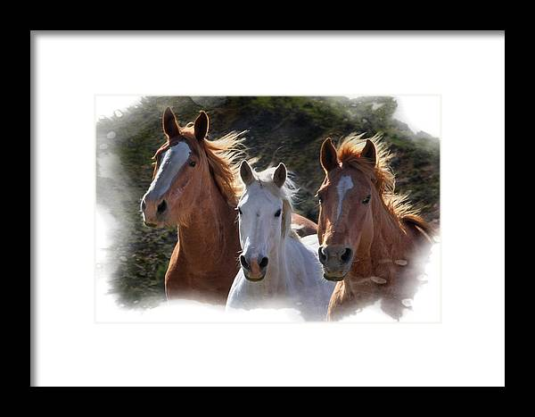 Horses Framed Print featuring the photograph Trio by Judy Deist