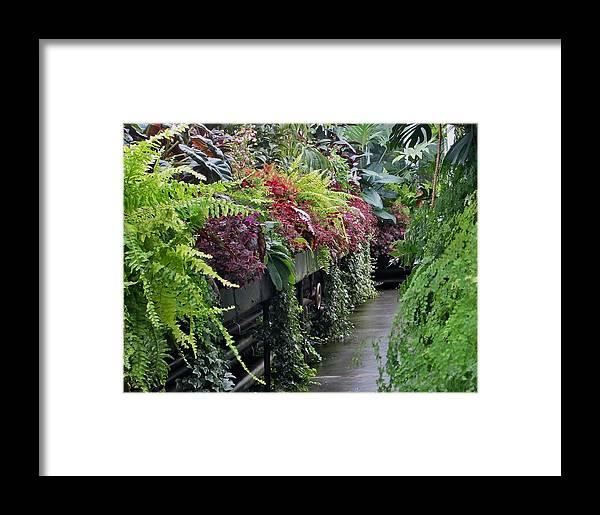 Tropical Plants Framed Print featuring the photograph Tropical Bush by Ami Tirana