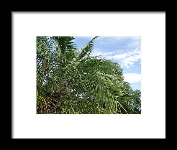 Palm Framed Print featuring the photograph Tropical Days by Rani De Leeuw