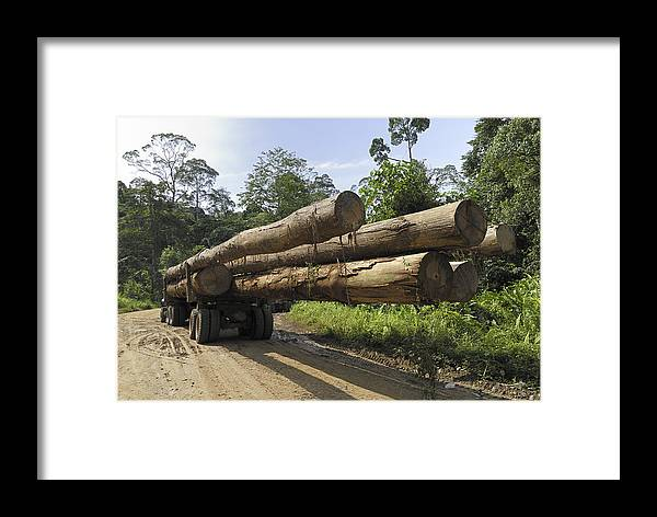 Mp Framed Print featuring the photograph Truck With Timber From A Logging Area by Thomas Marent