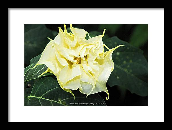 Metal Framed Print featuring the photograph Trumpet Flower Accented Fx by G Adam Orosco