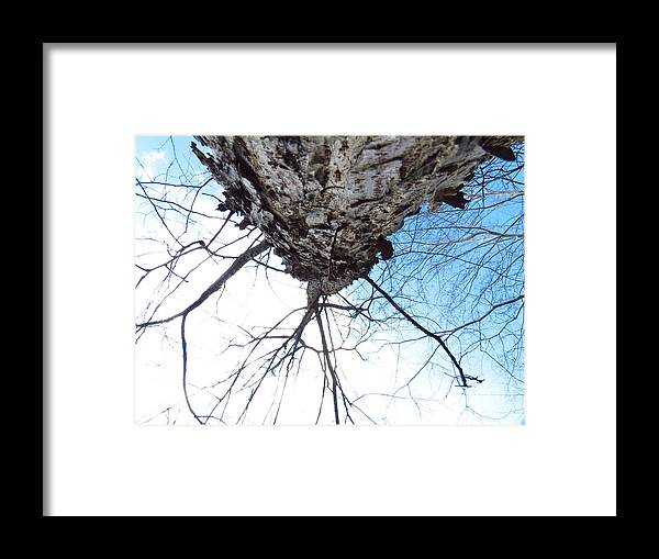 Tree Framed Print featuring the photograph Trunk by Rrrose Pix