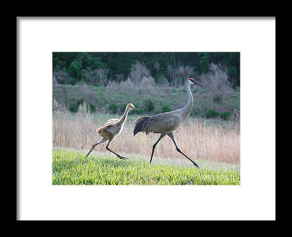 Bird Framed Print featuring the photograph Trying To Keep Up by Carol Groenen
