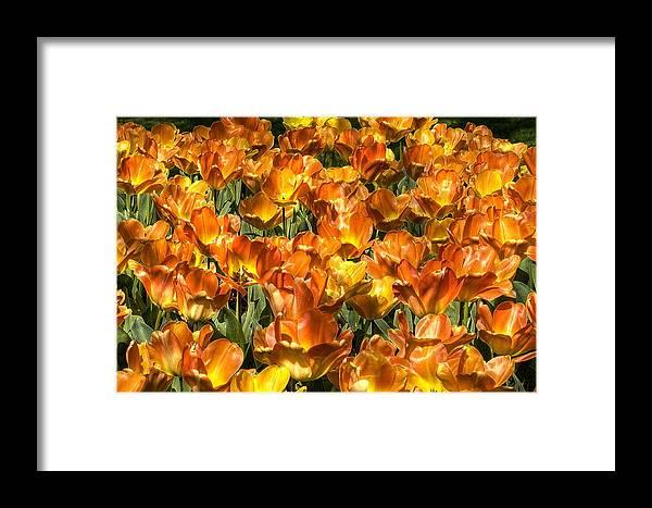 Tulip Framed Print featuring the photograph Tu Lip Gloss by Sandra Sigfusson