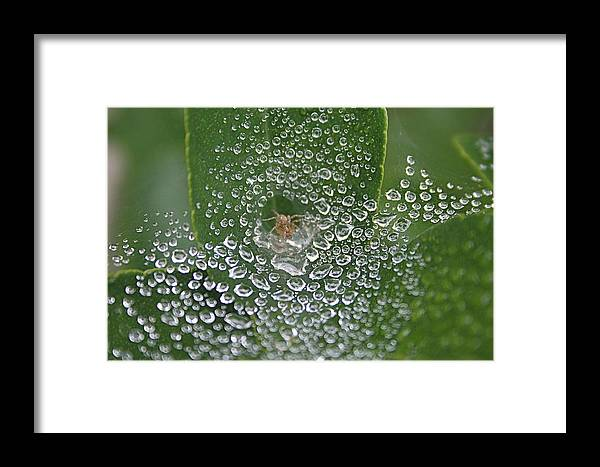 Tunnel Spider Framed Print featuring the photograph Tunnel Spider In Web by Ruth Edward Anderson