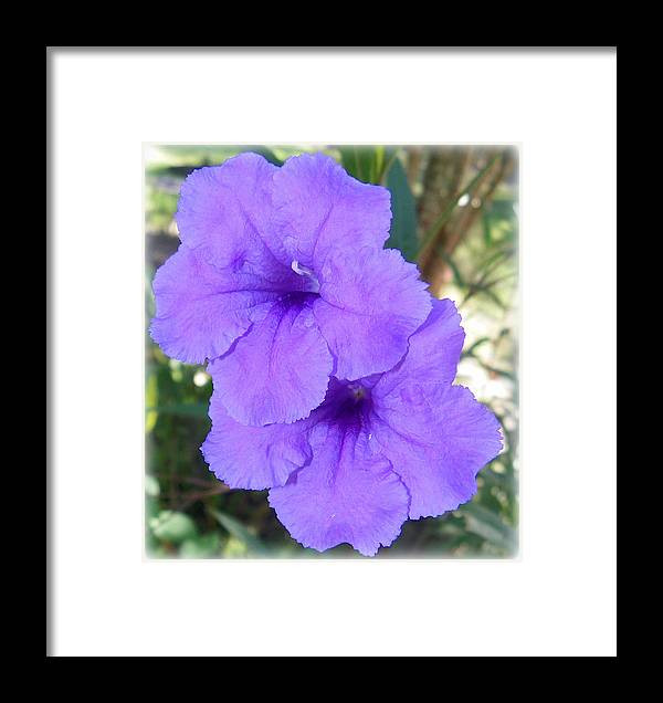 Mexican Petunia Framed Print featuring the photograph Twice As Nice by Sheri McLeroy