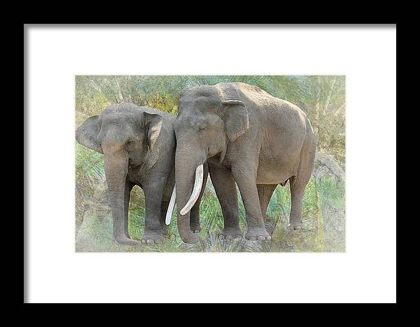 Trunk Framed Print featuring the photograph Twin Elephants by Rudy Umans