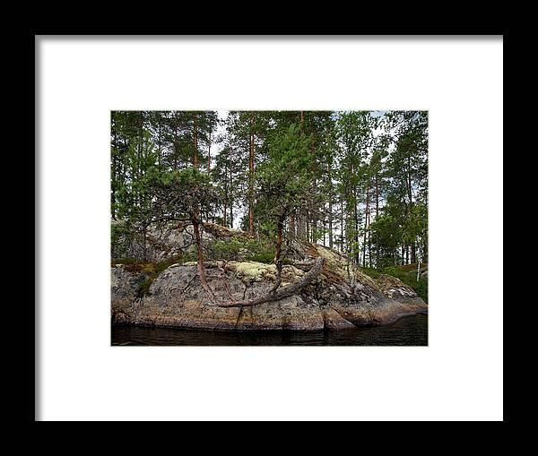 Haukkajärvi Framed Print featuring the photograph Twisted Pine by Jouko Lehto
