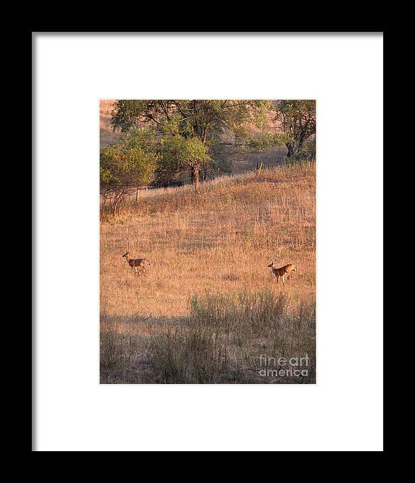 Deers Framed Print featuring the photograph Two Bucks On The Run by Yumi Johnson