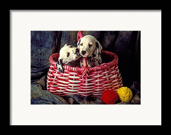 Two Dalmatian Framed Print featuring the photograph Two Dalmatian Puppies by Garry Gay