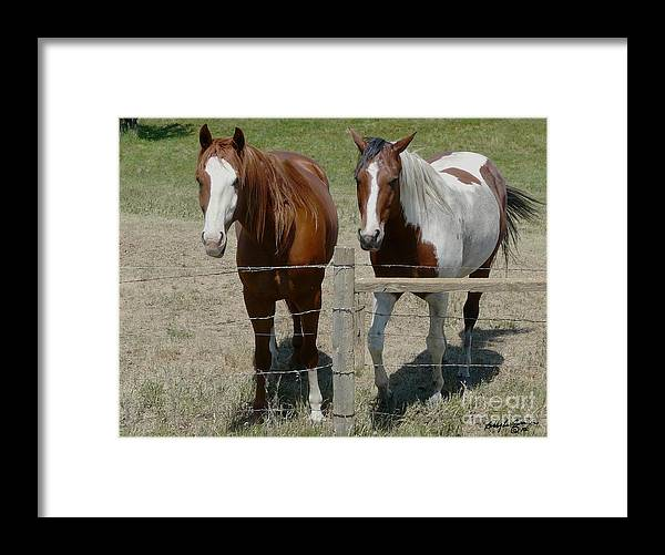 Brown Framed Print featuring the photograph Two Friends by Bobbylee Farrier