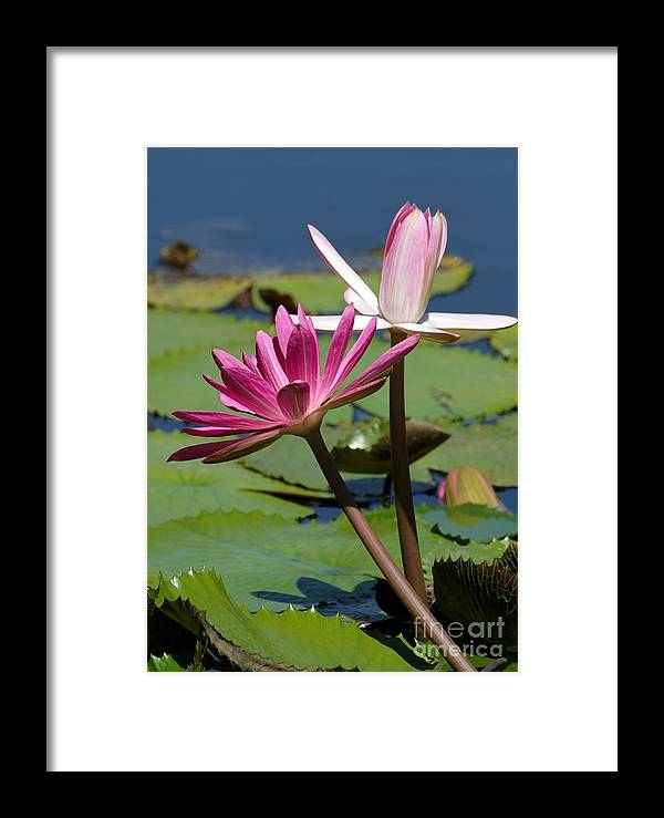 Pink Framed Print featuring the photograph Two Graceful Water Lilies by Sabrina L Ryan