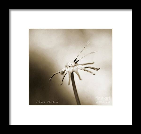 Nature Framed Print featuring the photograph Two Late by Penny Haviland