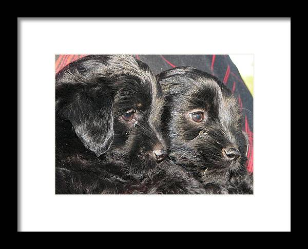 Puppies Framed Print featuring the photograph Two Matched Pups by Mel White Photo