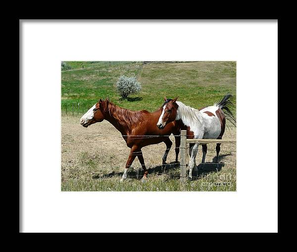 Brown Framed Print featuring the photograph Two Pals by Bobbylee Farrier