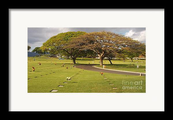 Nature Framed Print featuring the photograph Two Trees by Silvie Kendall