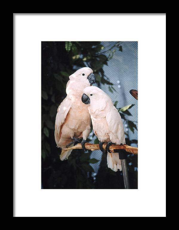 Birds Framed Print featuring the photograph Two Very Good Friends by Mel White Photo