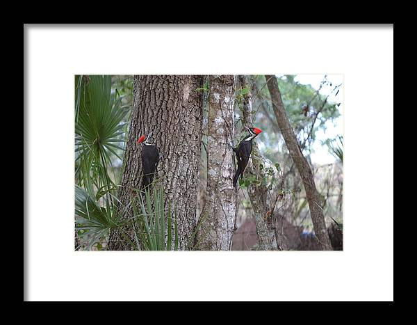 Framed Print featuring the photograph Two Woodpeckers by Katrina Johns