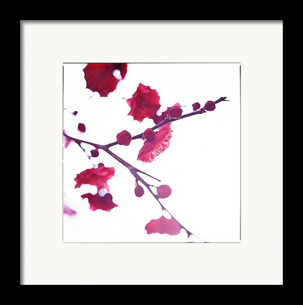 Vertical Framed Print featuring the photograph Ume Blossom Under The Sun by Moaan