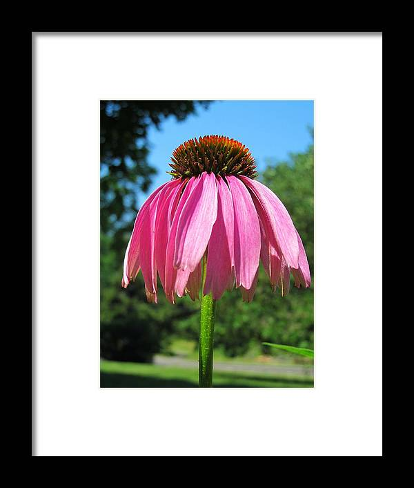 Flora Framed Print featuring the photograph Ummmm-brella by Phil Cappiali Jr