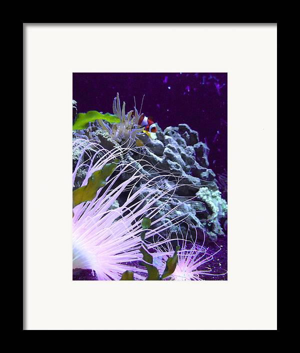 Underwater Framed Print featuring the photograph Undersea World by Robin Hewitt