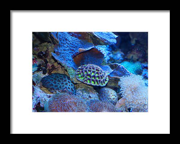 Aquarium Of The Pacific Framed Print featuring the photograph Underwater Paradise by Andrea Simon