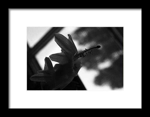 Succulent Framed Print featuring the photograph Untitled - Schlumbergera Bridgessii by RC Hagy