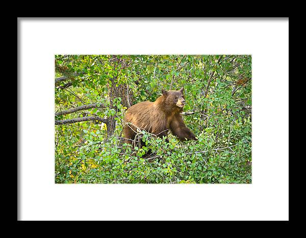 Grand Teton National Park Framed Print featuring the photograph Up A Tree by Greg Norrell