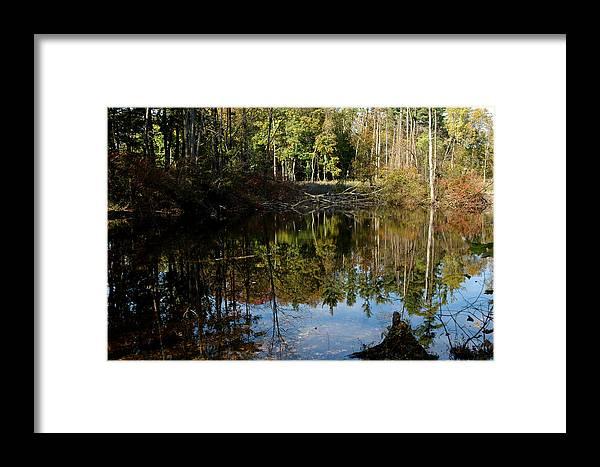 Usa Framed Print featuring the photograph Up Down Beauty All Around by LeeAnn McLaneGoetz McLaneGoetzStudioLLCcom