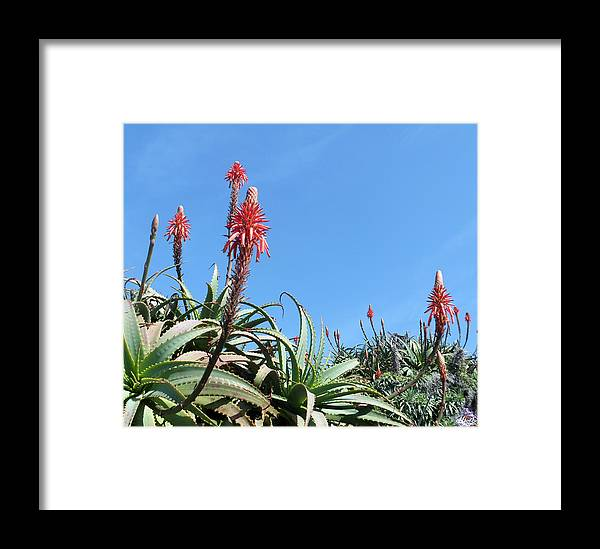 Red Flowers. Framed Print featuring the photograph Up by Laura Hol Art