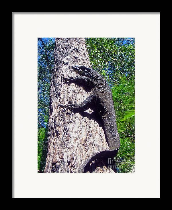 Goanna Framed Print featuring the photograph Up Ya Go by Joanne Kocwin