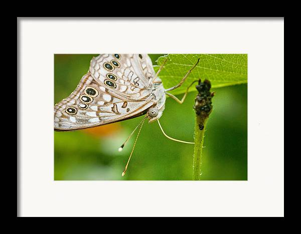 Nature Framed Print featuring the photograph Upclose Moth_1 by Lisa Spencer
