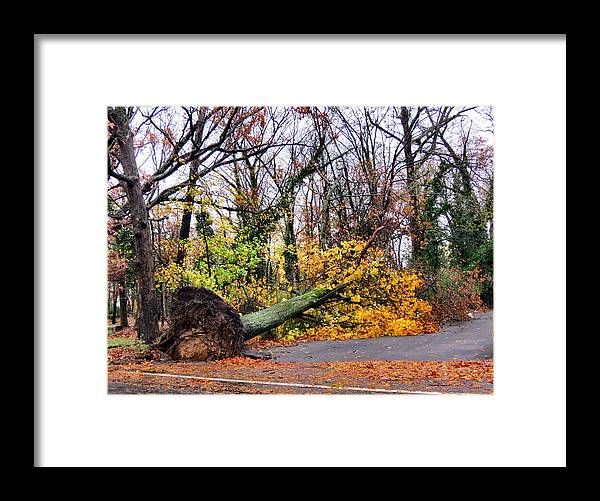 Wind Framed Print featuring the photograph Uprooted by Art Dingo