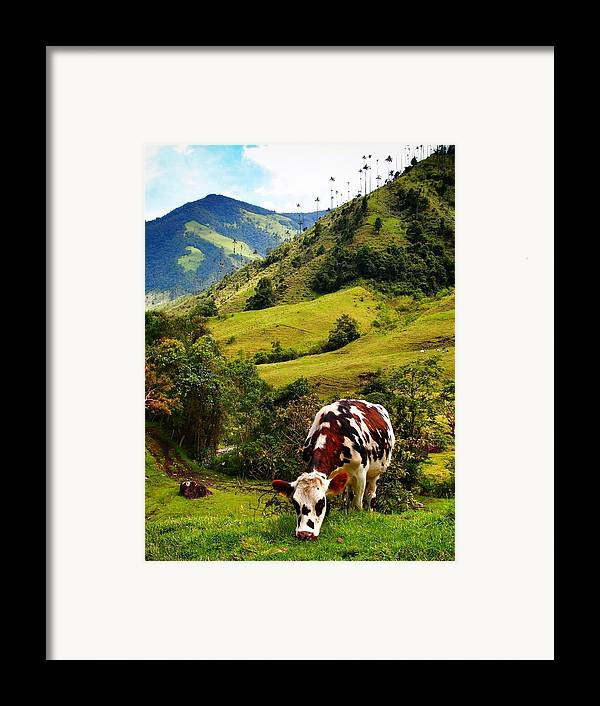 Vaca Framed Print featuring the photograph Vaca by Skip Hunt