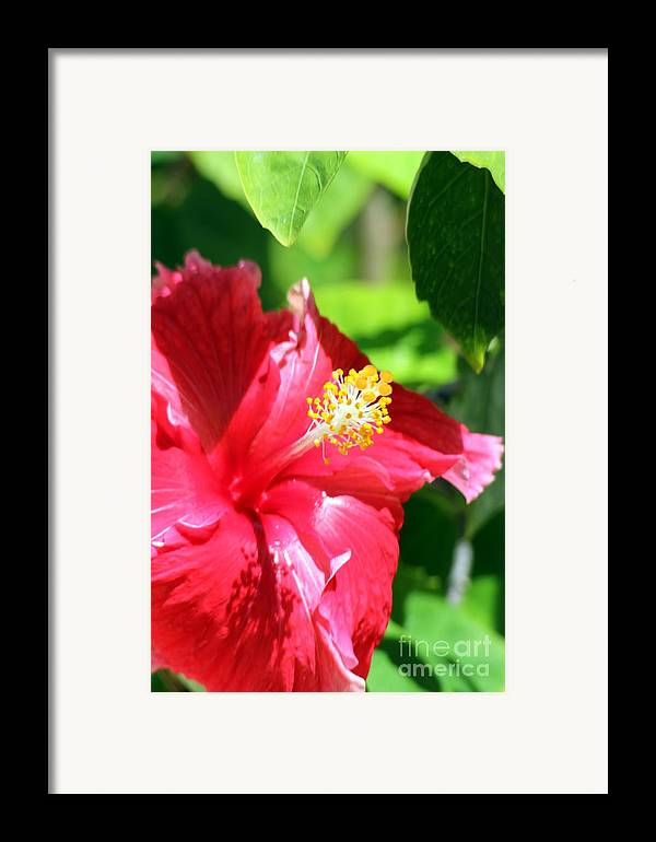 Flower Framed Print featuring the photograph Vanity by Sophie Vigneault