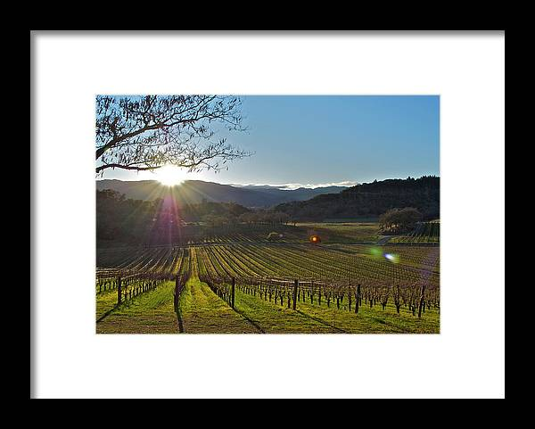 Framed Print featuring the photograph Vines by Lori Leigh