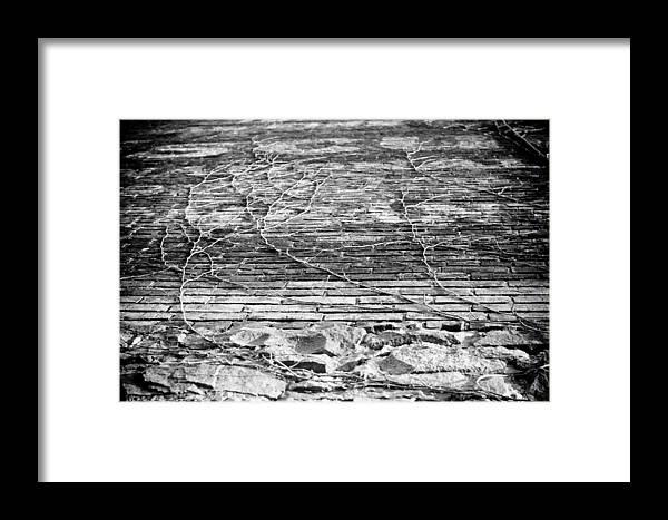 Window Framed Print featuring the photograph Vines by Paul Bartoszek