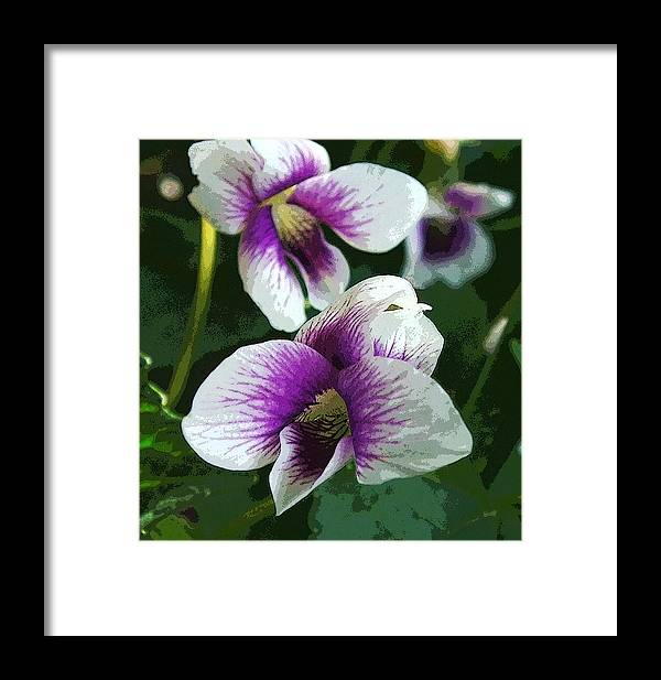 Nature Framed Print featuring the photograph Viola by Michael Friedman