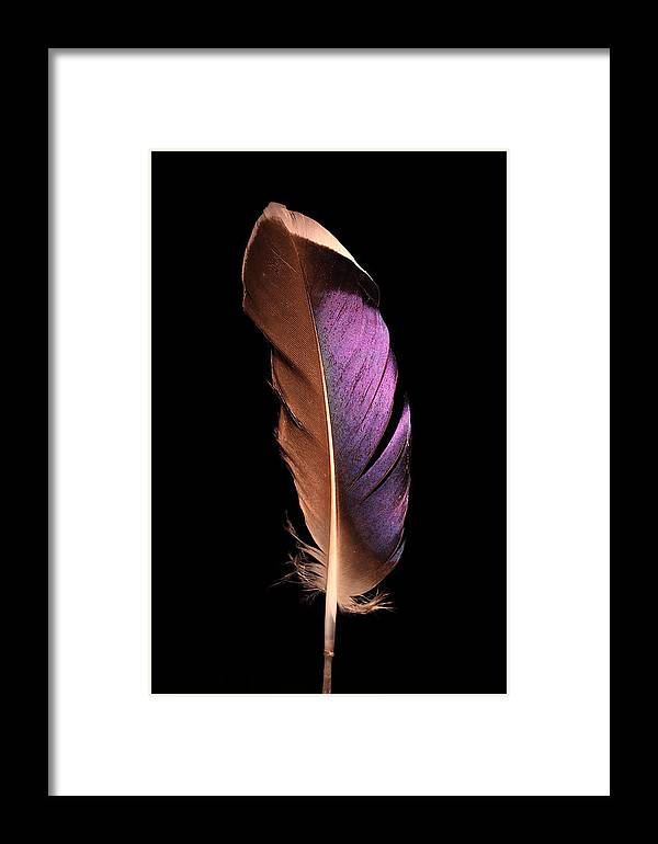 Feather Framed Print featuring the photograph Violet Splendor by Adam Long